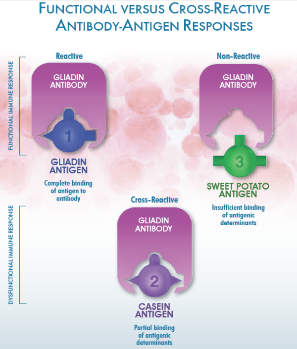 Functional versus cross reactive antibody antigen responses